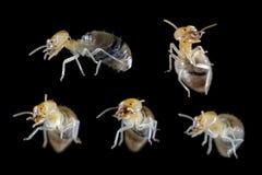 Termite head focus Stock Photo