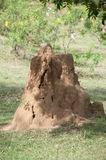 Termite hill Stock Photos