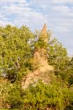 Termite hill in africa - national park selous game reserve in tanzania stock photography