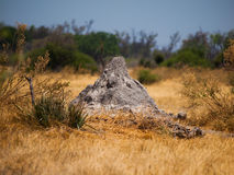 Termite hill in Okavango region Royalty Free Stock Photography