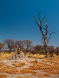 Termite hill in Okavango region Stock Image