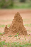 Termite House royalty free stock images