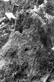 Termite house Royalty Free Stock Photo