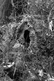 Termite house Stock Photo