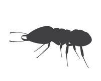 Termite Insect Silhouette. Vector Illustration Royalty Free Stock Photos