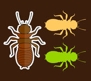 Termite Insects Royalty Free Stock Image