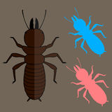 Termite Insects Vector Stock Photo