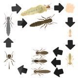 Termite Life Cycle Stock Photography
