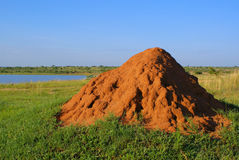 Termite mound. In South Africa stock images