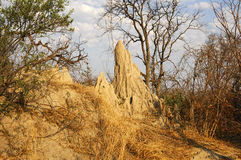 Termite mound. In the African savanna, Africa Royalty Free Stock Image