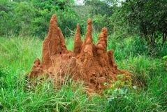 Termite mound royalty free stock image