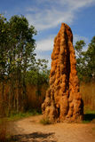 Termite Mound Royalty Free Stock Photography