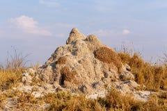 Termite mound in Africa. Etosha national park Namibia Stock Photos