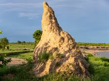 Termite Mound in Africa royalty free stock photo
