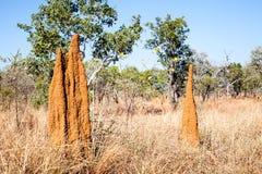 Termite mound in Australia Stock Photo