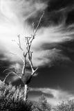 Termite mound in the Australian bush Stock Images