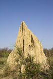 Termite mound in Bardia, Nepal Royalty Free Stock Image