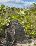 Termite Mound on Beach Dune Royalty Free Stock Photo