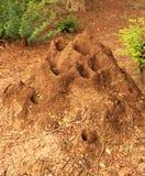 Termite mound. Big termite mound in india Royalty Free Stock Photos