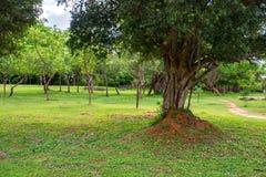 Giant termite mound. Termite mound in bush of Sri Lanka Stock Images