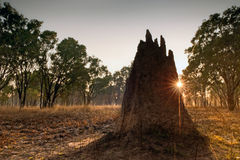 Termite mound at dawn. Northern Territory, Australia Royalty Free Stock Photography