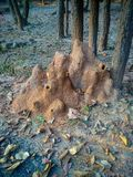 Termite mound in the forest stock images