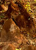 Termite mound in the forest. The towers of big termite mound at the forest with dried leaves Stock Photography