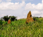 Termite Mound in Ghana West Africa. Mounds of soil created by termites near Accra in Ghana on the West Coast of Africa royalty free stock photo