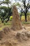 Termite mound. Or termite hill in Namibia, Africa Royalty Free Stock Photography