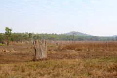 Termite Mound. Huge termite mound in Litchfield, Northern Territory, Australia Stock Images