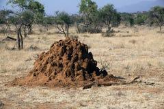 Termite mound in Kenya. Termite mound in Safari in  Kenya Royalty Free Stock Photography