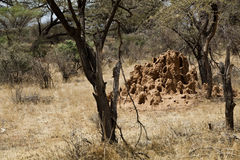 Termite mound in Kenya Stock Photo
