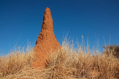 Termite mound Royalty Free Stock Photo