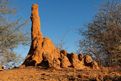 Termite mound. Massive termite mound against a blue sky, southern Africa Royalty Free Stock Photos