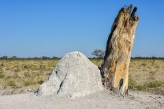 Termite Mound - Namibia Stock Photography