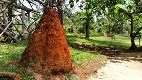 Termite mound. Next to the path in the park Stock Photo