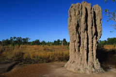 Termite Mound in Northern Australia Stock Photo