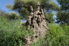 Termite mound in Serengeti National Park Stock Photo
