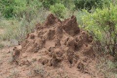 Termite mound Stock Photos