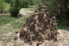 Termite mound in Serengeti National Park Royalty Free Stock Image