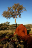Termite Mound and Tree on Red Earth Royalty Free Stock Photos