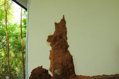 Termite mound. At the wall of house royalty free stock images