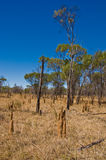 Termite Mounds Stock Photography