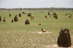 Termite mounds - Australia Royalty Free Stock Images