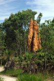 Termite mounds in Australia Stock Photos