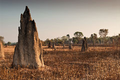 Termite mounds at dawn. Northern Territory, Australia Stock Image