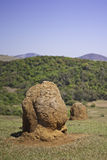 Termite mounds in a farm Stock Image