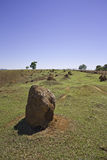 Termite mounds in a farm Royalty Free Stock Photo