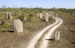 Termite mounds. In Litchfield National Park in the Northern Territory of Australia Stock Images