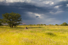 Termite mounds on namibian farmland Stock Image